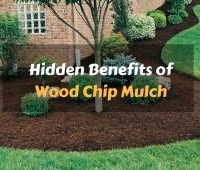 Incredible Advantages of Using Organic Forest Mulch in Your Garden